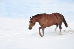 Horse walking in deep snow field Royalty Free Stock Photos