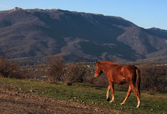 Horse walking in mountains Royalty Free Stock Photos