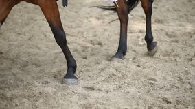 Horse walking on the sand stock video footage