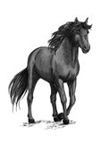 Horse walking in slow gait sketch portrait. Horse walking in slow gait. Gray wild mustang pacing along road. Arabian equine mare stands with half lifted hoof Royalty Free Stock Image