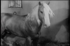 Horse walking in stable stock video footage