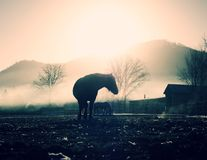 Horse walks in mist. Cold fall day in mountains stock photos