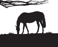 Horse Wall Decal Royalty Free Stock Photo