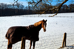 Horse in warm blanket on winter pasture Royalty Free Stock Photography