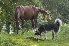 Very surprised horse and dog stock image