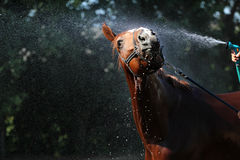 Horse wash Stock Photo