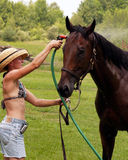 Horse Wash Hat Girl in shorts 2 Royalty Free Stock Photos
