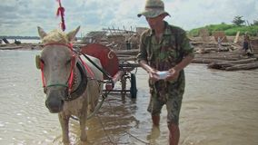 Horse wash, horse cleaning, relaxing, resting ,horse cart stock video footage