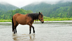 Horse in water Royalty Free Stock Photo