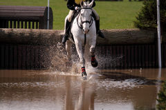 Horse at water jump 3 Stock Photography