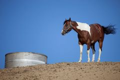 Horse and Water Tank Stock Photo