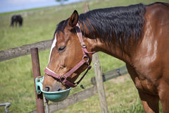 Horse at Watering place Royalty Free Stock Image