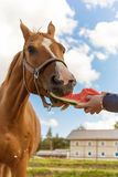 Horse and watermelon Stock Photo