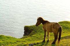 Horse at waterside. Horse nippling grasses at waterside Stock Images