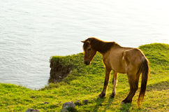 Horse at waterside. Horse nippling grasses at waterside stock photos