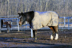 Horse wearing a blanket Royalty Free Stock Image