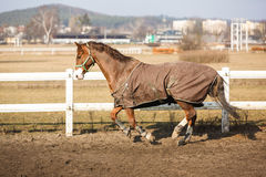 Horse wearing a blanket Stock Images