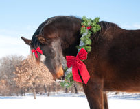 Horse wearing a Christmas wreath and a bow Stock Photos