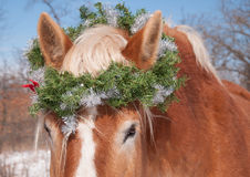 Horse wearing a Christmas wreath Stock Photography