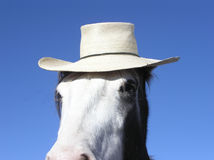 Horse wearing a hat. Close-up of horse with hat Royalty Free Stock Photos
