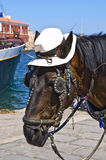 Horse Wearing a Hat Head Closeup. A chestnut-brown horse wearing a small canvas hat protecting its head from the sun. The horse's ears stick out. The horse is Royalty Free Stock Photography