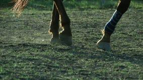 Horse wearing leg bandages stock video footage