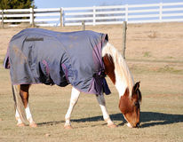 Horse Wearing Rug Stock Photo