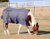 Horse Wearing Rug stock photo