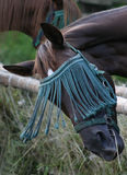 A horse wearing tassels against insects. Stock Photography