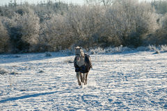 A horse wearing a winter blanket royalty free stock image
