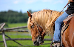 Horse western Stock Images