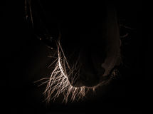 Horse whiskers Royalty Free Stock Photography