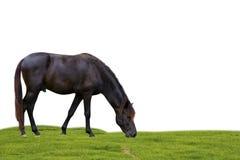Horse on white background. Stock Image