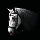 Horse. White horse on black background Stock Photo