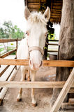 Horse. A white horse in the cage Royalty Free Stock Image