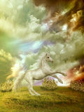 Horse. White horse in the field in stormy day Stock Photography