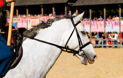 Horse white head portrait. The white horse is on the show stock photos