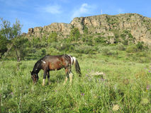 Horse with white markings. Brown horse with white markings grazing in meadow Stock Photo