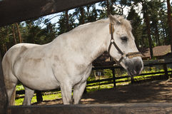 Horse white suit for the fence Royalty Free Stock Photography