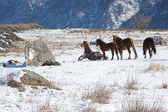The horse who is getting up from snow on a mountain pasture Royalty Free Stock Photos