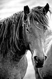 Horse in the wild. Horse feeling free on the hills Royalty Free Stock Photography