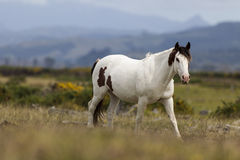 Horse in the wild Stock Photos