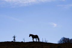 Horse in wild nature Stock Image