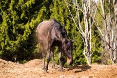 Horse in wild nature Stock Photos