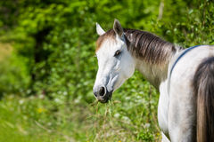 Horse in the wildflowers. Horse in the forest in summer time Stock Photos