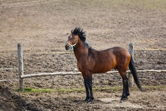 Horse in the wind Royalty Free Stock Photography