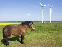 Horse and wind turbines Royalty Free Stock Image