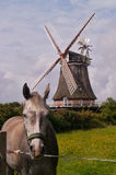 Horse and windmill Royalty Free Stock Image