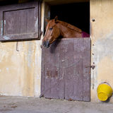 Horse at the window Stock Images