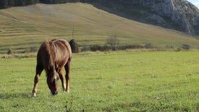 Horse on Windy Grassland stock video